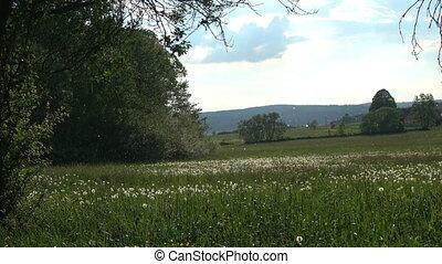 paysage., pissenlit, contre, porte, graines, fond, rural, vent