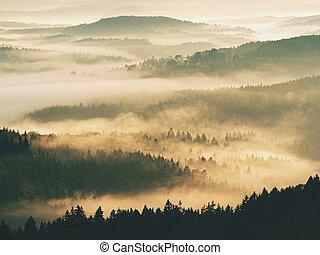 paysage, profond, beau, weather., automne, vallonné, sunrise., inversion, forêt, dans