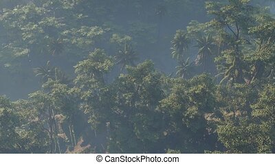 paysage, rainforest, jungle, brouillard a couvert