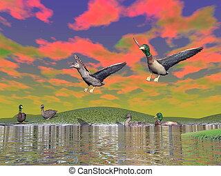 paysage, render, -, canard colvert, 3d