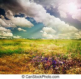 paysage rural, nature, beau