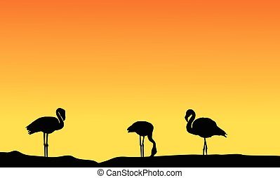 paysage, silhouette, flamant rose, coucher soleil