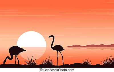 paysage, silhouettes, flamant rose, coucher soleil