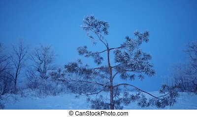 paysage, tempête neige