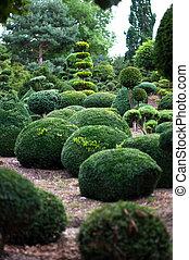 paysage., topiary jardin