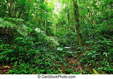 paysage tropical, rainforest