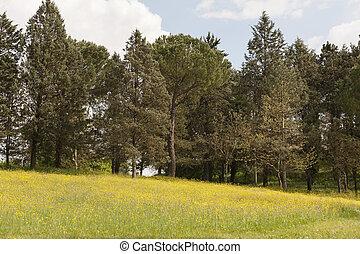 paysage, vallonné
