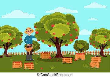 paysage., vecteur, naturel, plat, bois, fruit, farm., boîtes, basket., conception, pommes, harvest., cueillette, jardinier