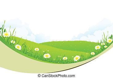 paysage vert
