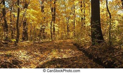 paysage., voyante, forest., sélectif, nature, feuilles, prise vue., arbres, jaune, brouillé, automne, arrière-plan., terre, forêt, feuillage, foyer., sauvage, couvert, doux, wood., route