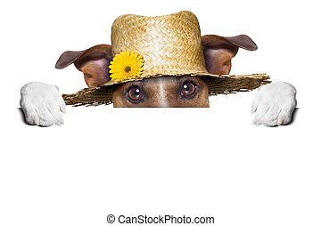 paysan, chien