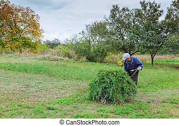 paysan, dans, vieux, vêtements, mows, herbe, dans, les, champ