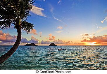 pazifik, lanikai, sonnenaufgang, hawaii