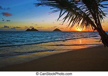 pazifik, sonnenaufgang, an, lanikai, sandstrand, hawaii