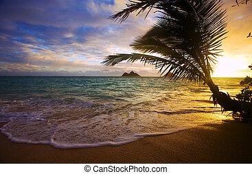 pazifik, sonnenaufgang, an, lanikai, sandstrand, in, hawaii