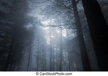 pełny, las, księżyc