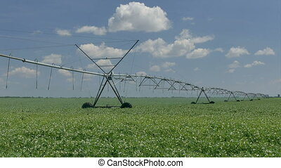 Pea  field with Irrigation system for water supply