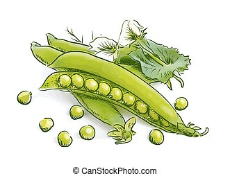 Pea pods isolated
