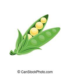 pea vegetable on white background