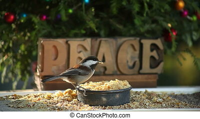 peace chickadee - hungry chickadee eats at a feeder with...