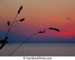 weeds on an unfocused sunset