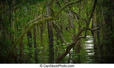 Peaceful Cambodian swamp in the afternoon light - Video...