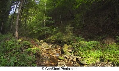 Peaceful Creek in Carpathian Mountains, with Sound - ...