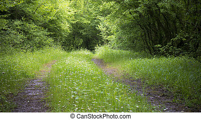 Peaceful Forest Road - Dirt road going through a green...