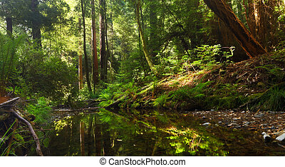 Peaceful Forest Stream - Beautiful small stream in a lush...