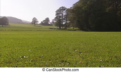 Peaceful green Ireland field - A steady shot from the ground...