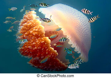 Peaceful image of a mosaic jellyfish.