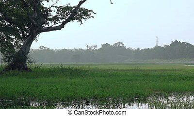 Peaceful Misty Meadow near Habarana. FullHD 1080p video -...