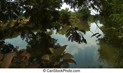 A hand held, tilting, medium shot of a peaceful, clear pond which can be found beneath the green tree leaves.