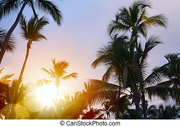 Peaceful tropical background; Sunset in the tropic