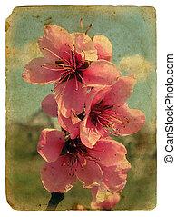 peach blossom. Old postcard.
