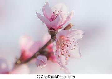 peach flower close up on blue sky background
