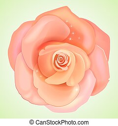 Peach pink rose isolated on light background, vector...