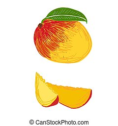 peach, sketch style, vector illustration