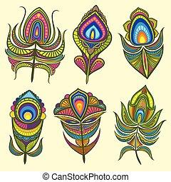 Peacock bird feathers vector collection