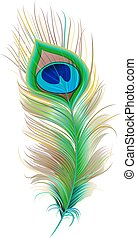 Peacock feather. Beautiful bird feather. Isolated on white...