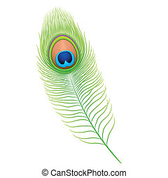 Detailed vector illustration of a peacock feather