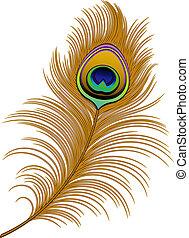 Peacock Feather over white. EPS 10, AI, JPEG