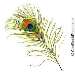 Peacock Feather Over White