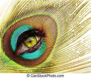 peacock feather with green eye