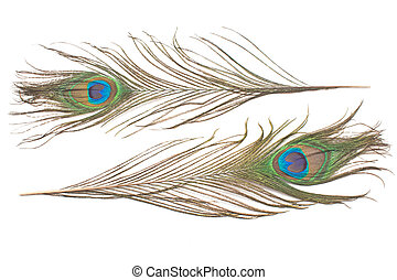 Peacock feathers isolated on white