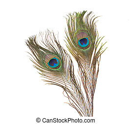 Peacock feathers over white background