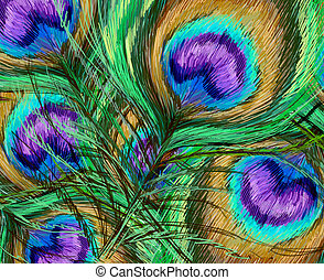 peacock features illustration