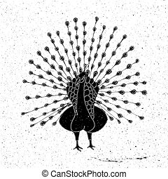 Peacock hand drawn