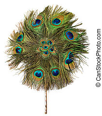 peacock hand fan isolated