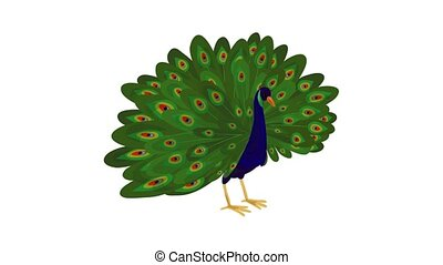 Peacock icon animation best on white background for any design